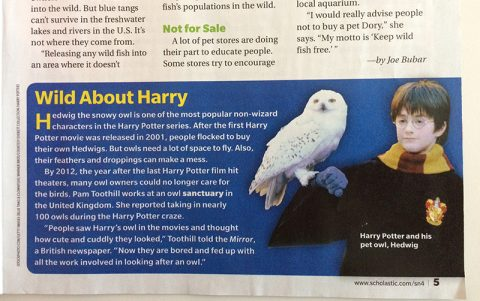 scholastic-news-wild-about-harry-sep-16